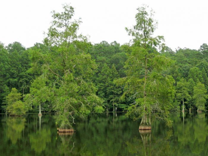8 Amazing Natural Wonders Hiding In Plain Sight In Delaware No