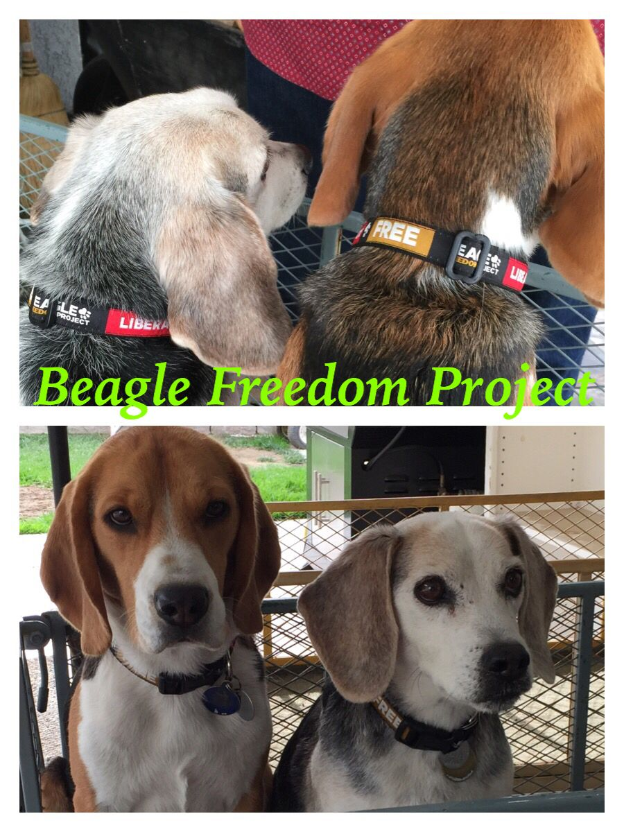 Boys With Their New Bfp Collars In Support Of Beagles In Testing