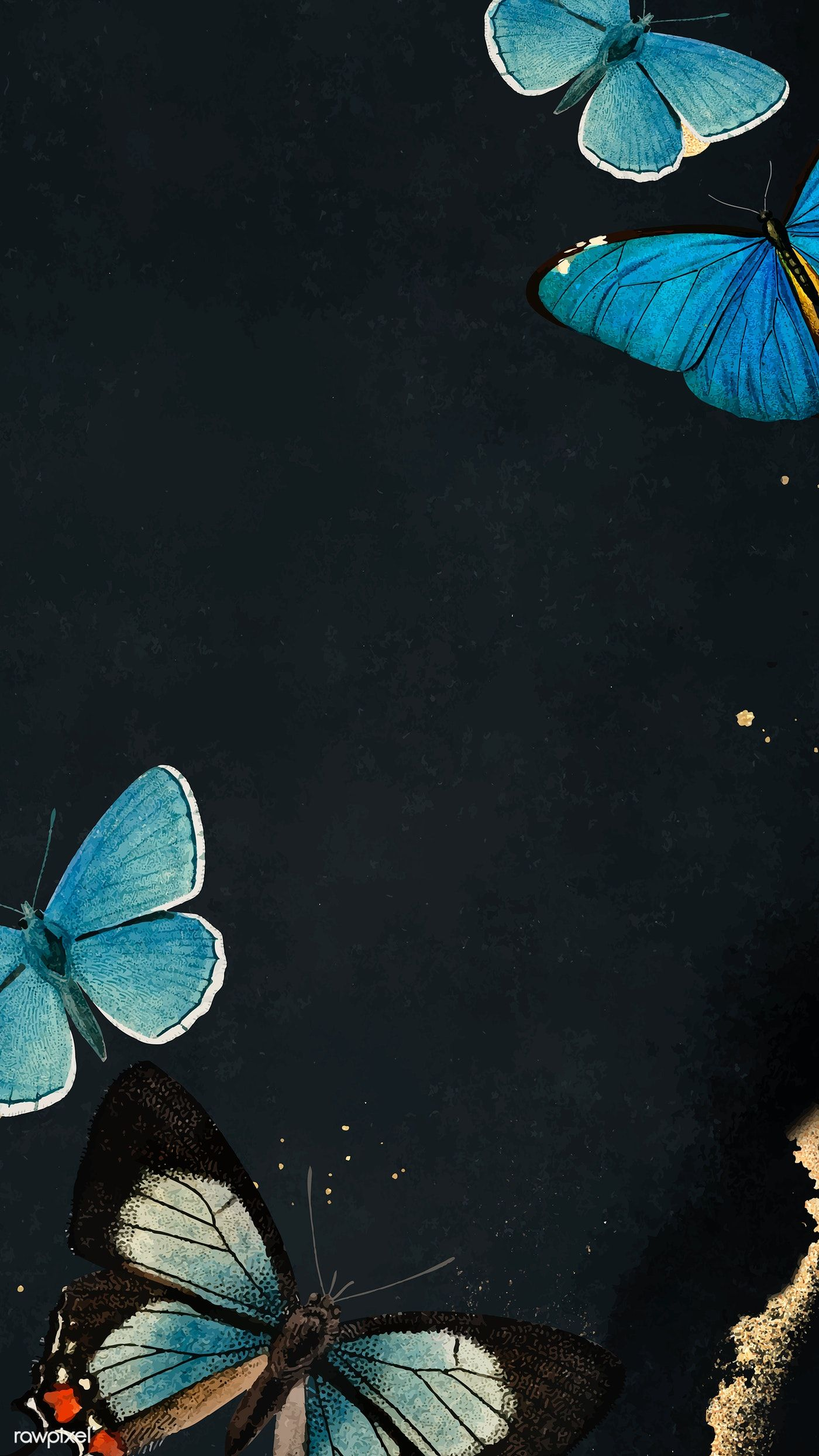 Download Premium Vector Of Blue Butterflies Patterned On Black Mobile Butterfly Wallpaper Iphone Blue Butterfly Blue Butterfly Wallpaper