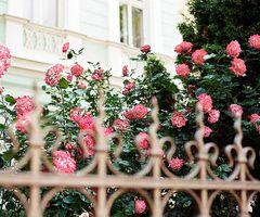 colors, vintage, cute, flowers ♥