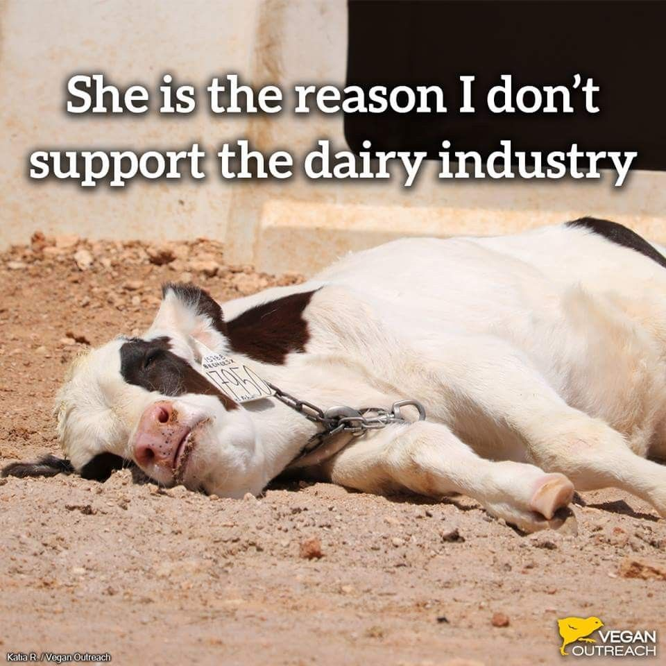 Animal Cruelty Quotes Please Help Stop The Cruelty And Go Vegan Why Vegan  Pinterest