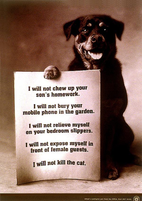 Rottweiler Promise Rottweiler Puppies