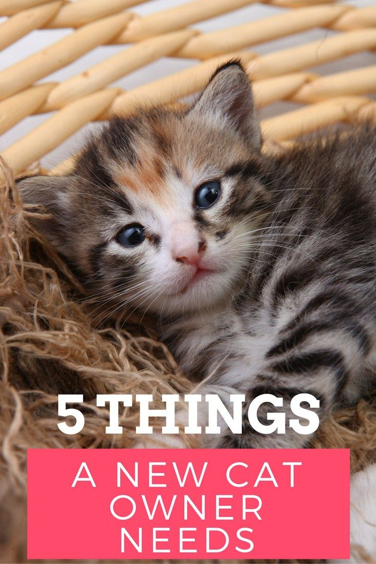 5 Things A New Cat Owner Needs Your Everyday Family Cats Animals Friends Dog Care