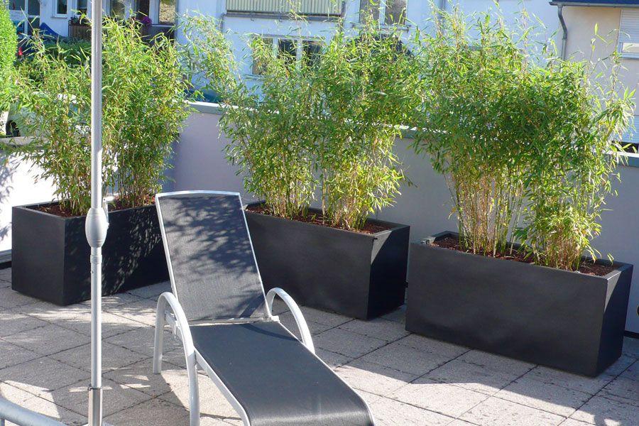 bambus-pflanzenshop - | garten | pinterest | garten - Bambus Kubel Sichtschutz Terrasse