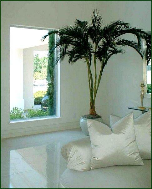 +: baywindow com uso de plantas.  -: não deveria haver uma opção de cortinas?