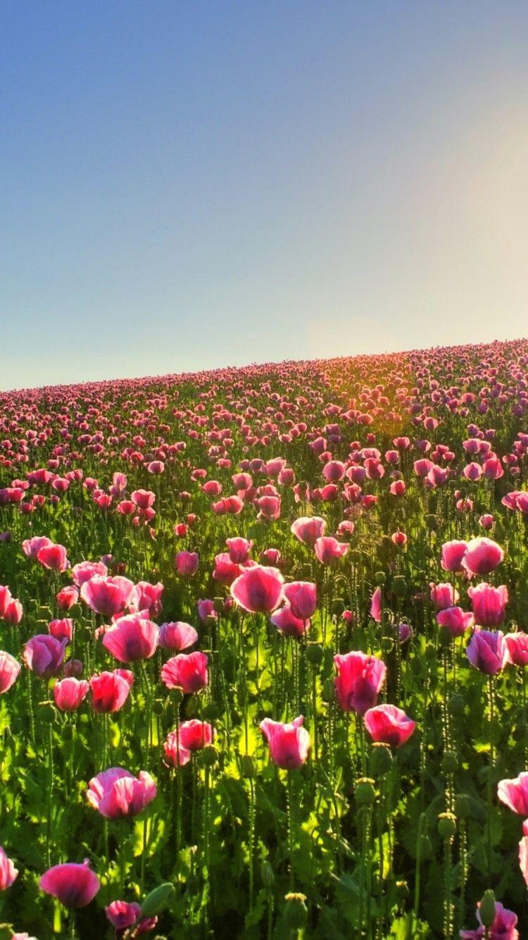 Lovely Spring Meadow D Beautiful Flowers Wallpapers Flower Wallpaper Flower Iphone Wallpaper