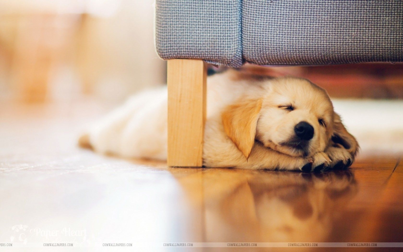 dog puppy retriever hd wallpaper | cute hd wallpapers | pinterest