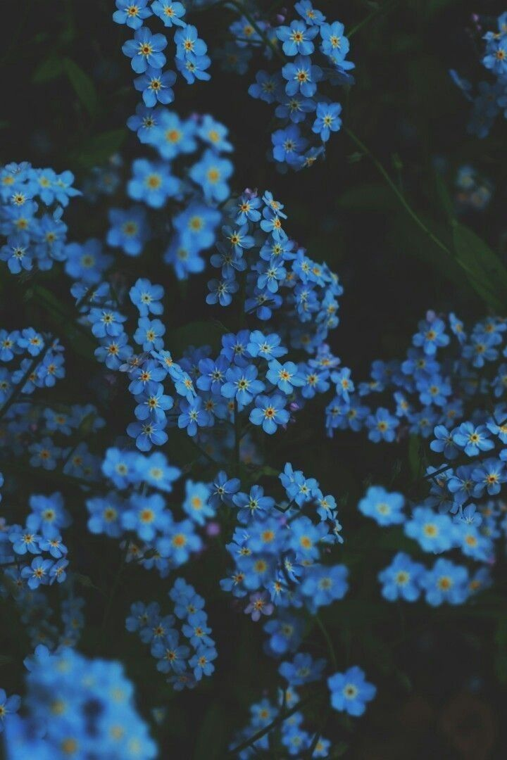BLUE FLOWERS WALLPAPER - Ellen