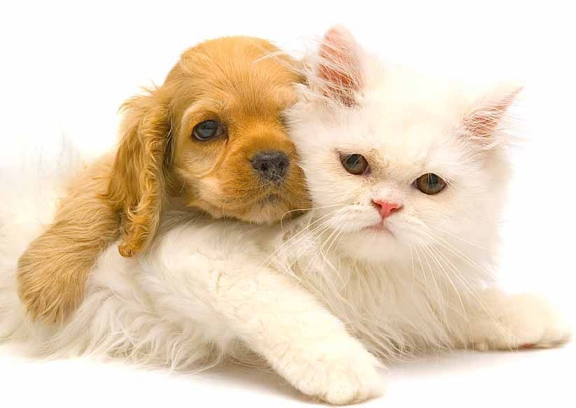MN Female Names For Dogs Cute kawaii animals, Animals, Pets