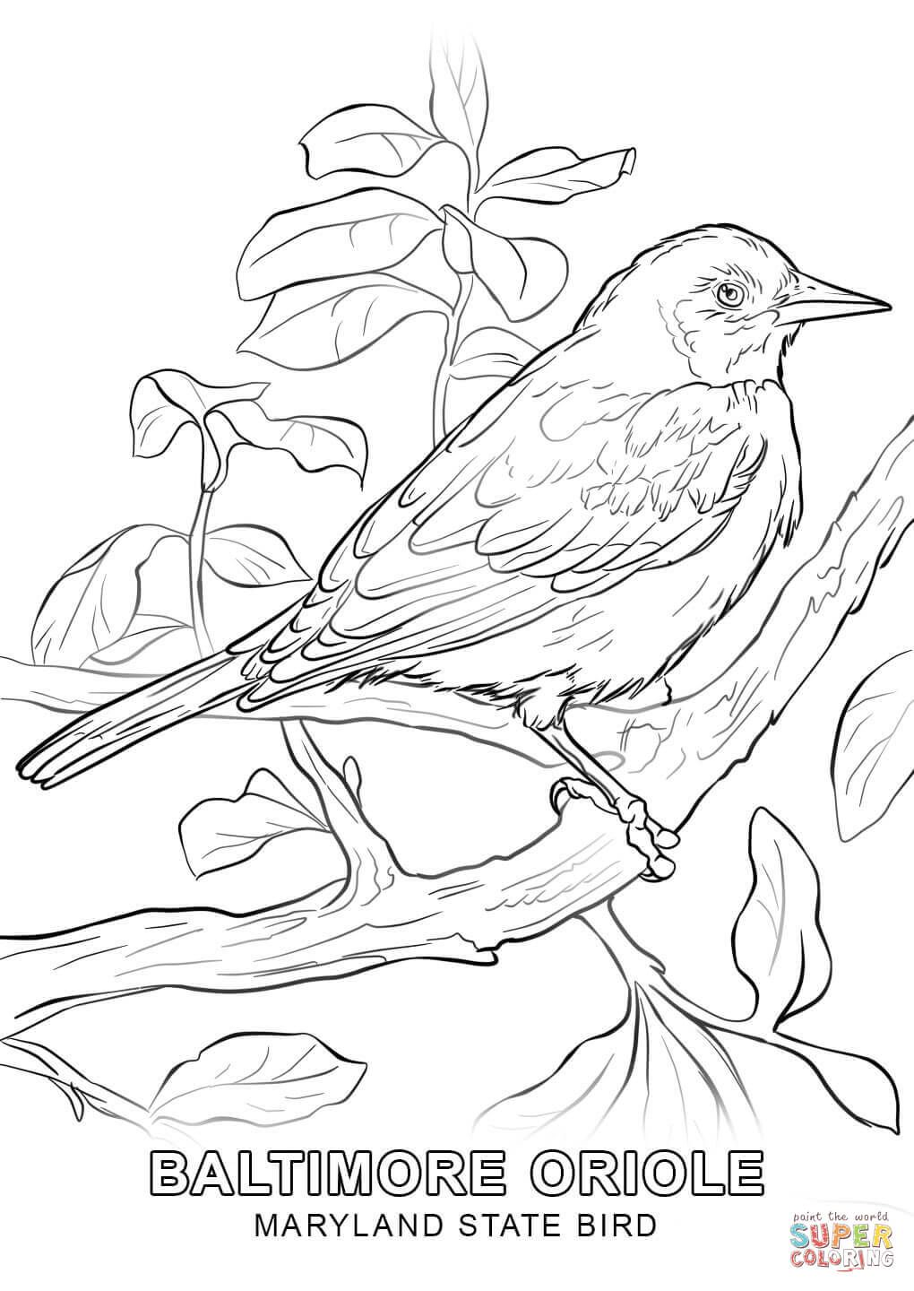 Maryland State Bird Coloring Page Jpg 1020 1440 Baseball
