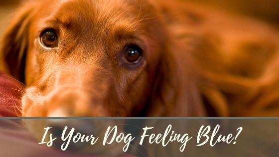 Is your dog feeling blue? Pet wellness, Dogs, Feelings