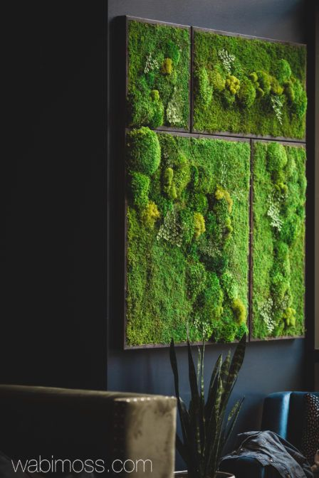 58x58 Real Preserved Moss Wall Art Green Wall Collage No Sticks. No care green wall art. Real preserved moss and ferns #wallcollage