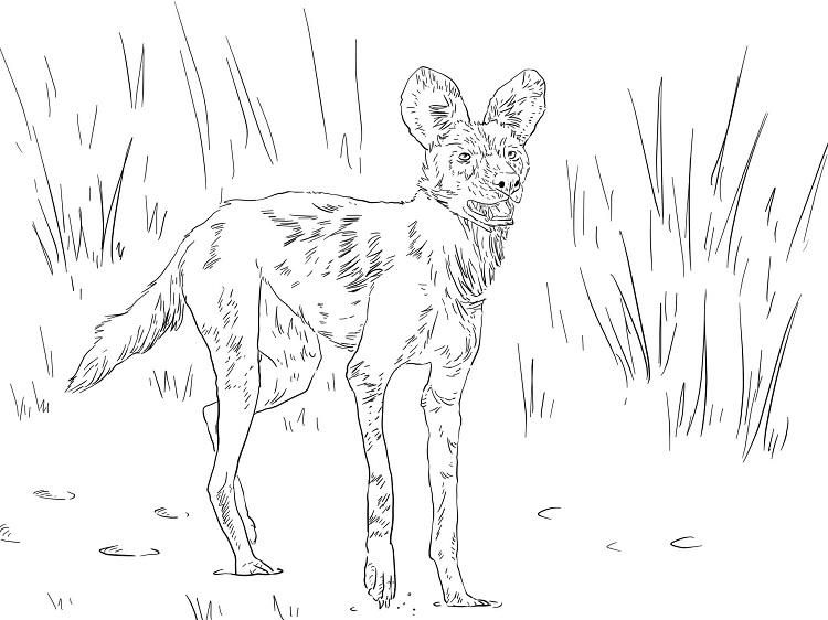 Read moreAfrican Wild Dog Coloring Pages | Dog coloring ...