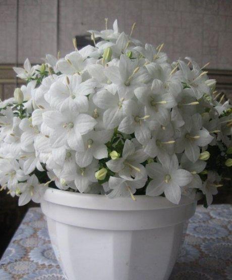 Пин от пользователя alina740 на доске kwiaty   Черенки роз ...