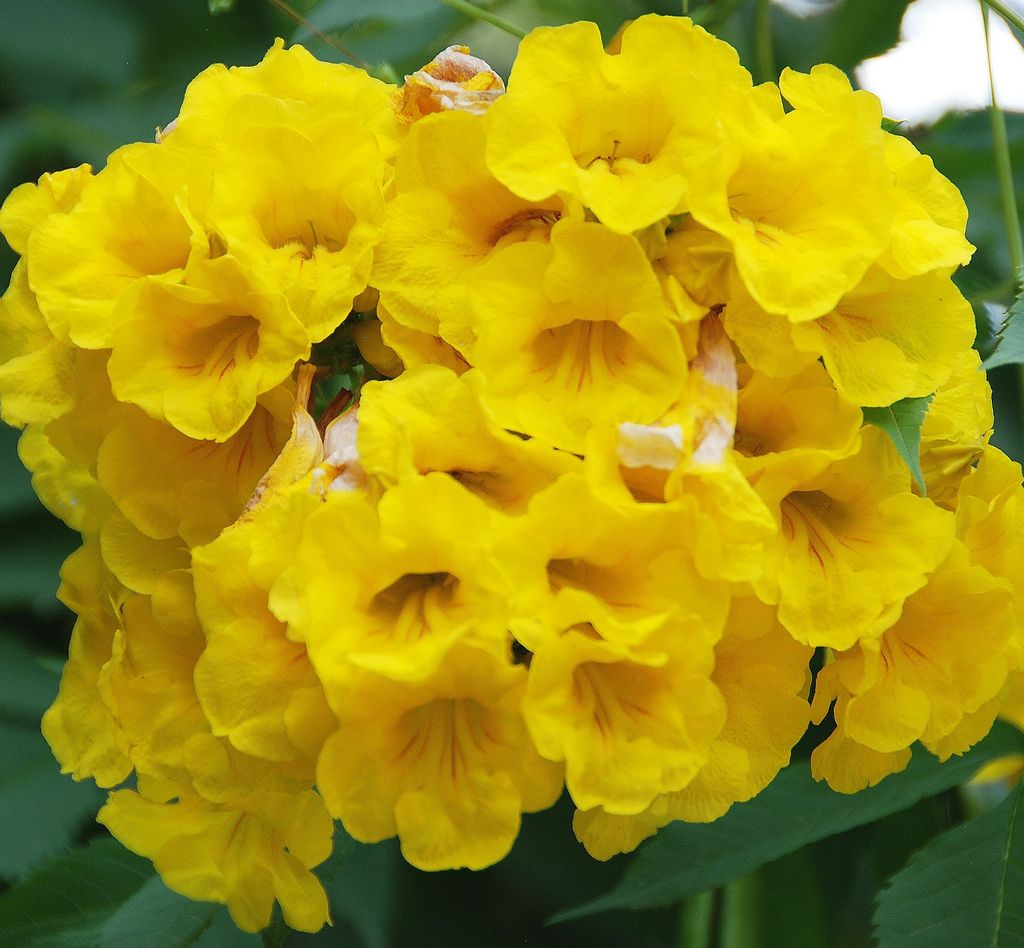 755. Beautiful yellow flowers in India. Their common names