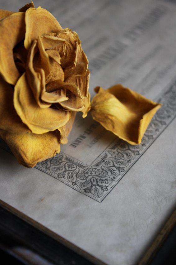 4月の初め...誕生日に届いた黄色い薔薇一輪綺麗なマスタード色になりました