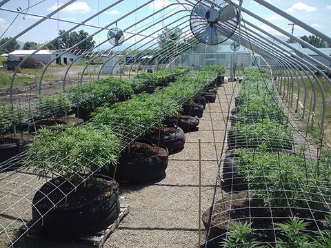 A Greenhouse In Oregon Plants Growing Smart Pots Getting Ready For