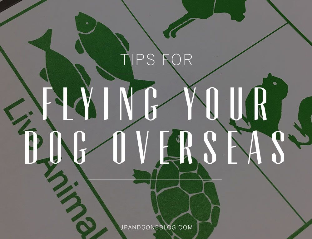 Moving Abroad Here S How To Move Your Dog Overseas With You Moving Overseas Dogs Road Trip