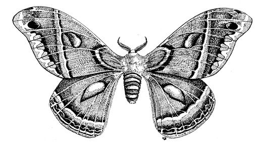 The contrast of light and dark inside the wings and close to the body part.