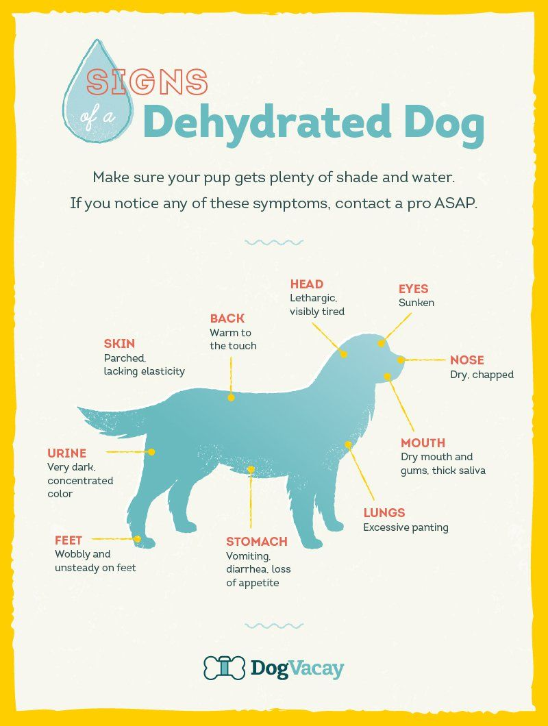 Discussion on this topic: How to Tell if Your Dog Is , how-to-tell-if-your-dog-is/