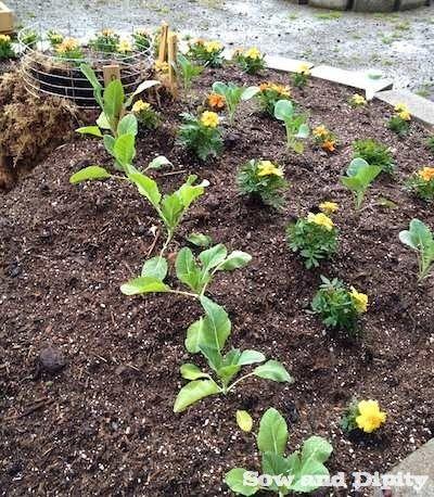 Keyhole Garden Tutorial -   Composting, Tutorials and Gardens