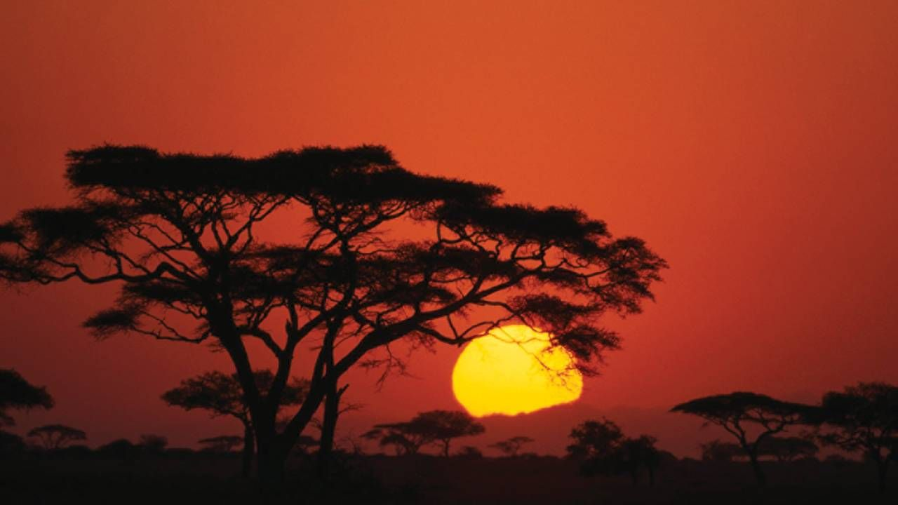 Bucket list sunset: watch the sun paint the sky red as it dips behind an acacia tree at Four Seasons Safari Lodge Serengeti, Tanzania.