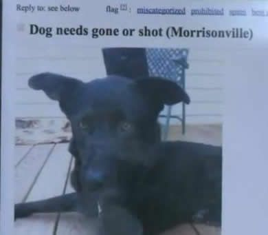 Owner Threatens To Shoot Dog In Craigslist Ad Video Dogs