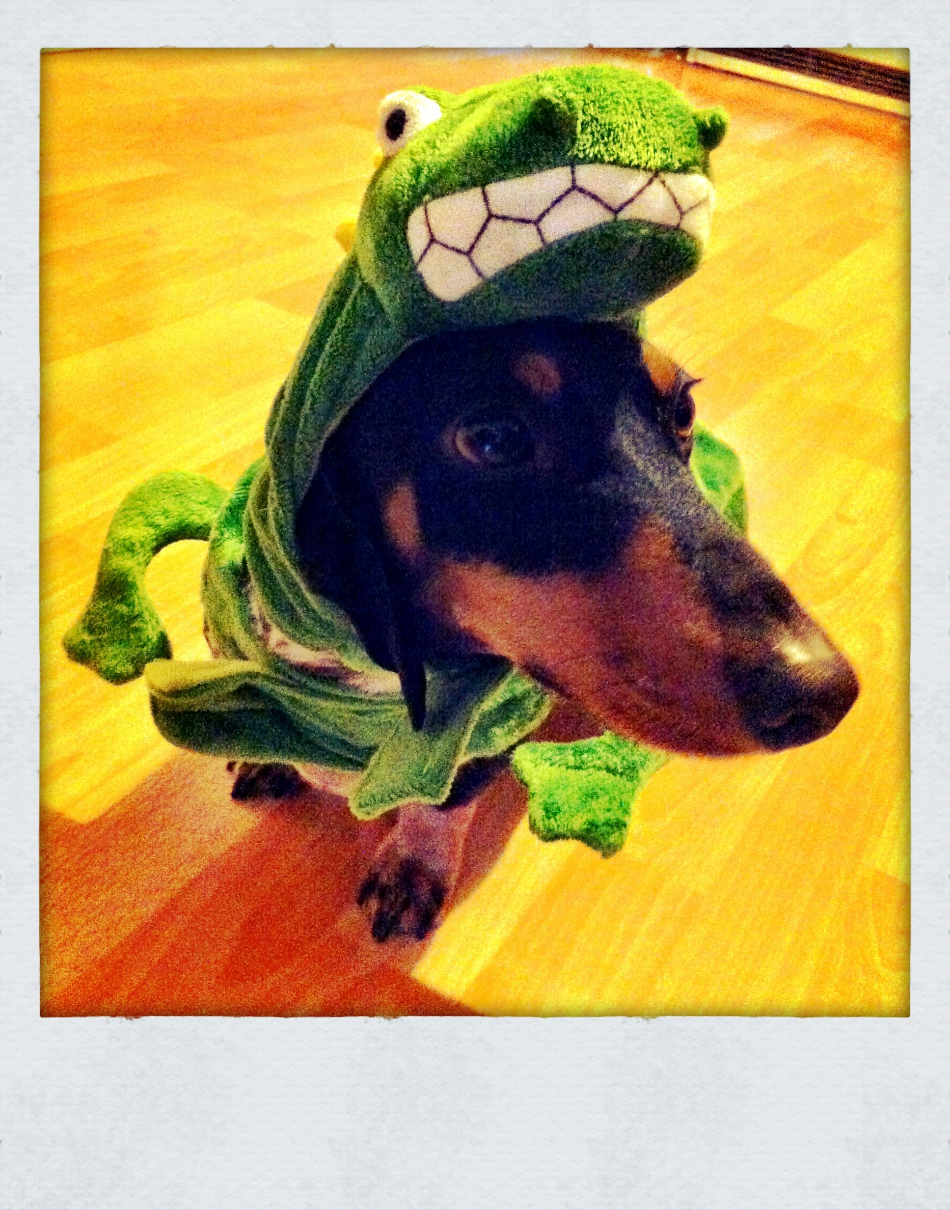 It S A Drackel Photo By C Auler Weiner Dog Dachshund Dogs Of The World