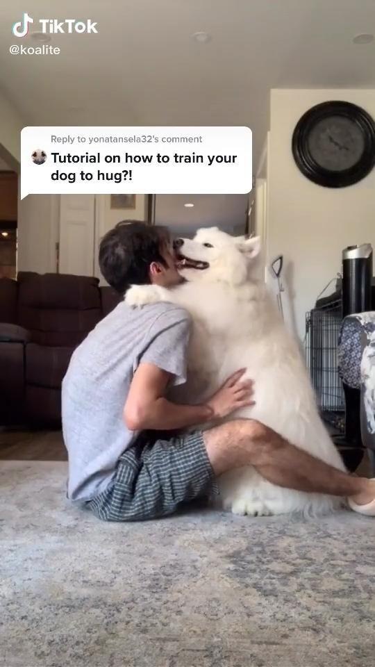 Tiktok Dogs Cutedog Video Cute Dogs Super Cute Animals Cute Animals