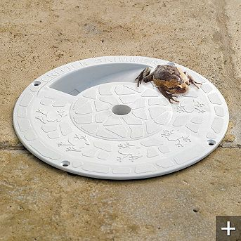 What could be better than saving frogs from the pool?