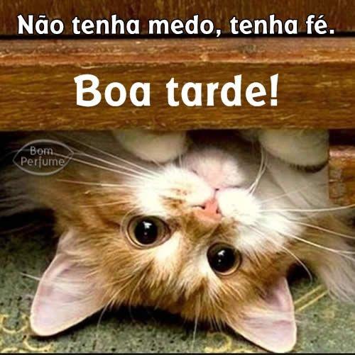 Boa Tarde Mensagens Para Facebook Gatinhos Cats Kittens E