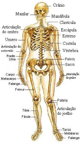 Anatomia Humana - Basica Fotos Imagens | Brasil em Alta | Medicina ...