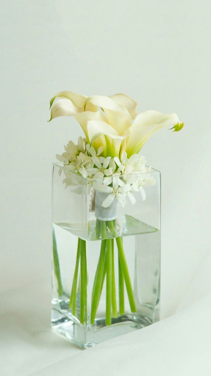 Pin By Anish Maurya On Anish Maurya Pinterest Flowers Calla