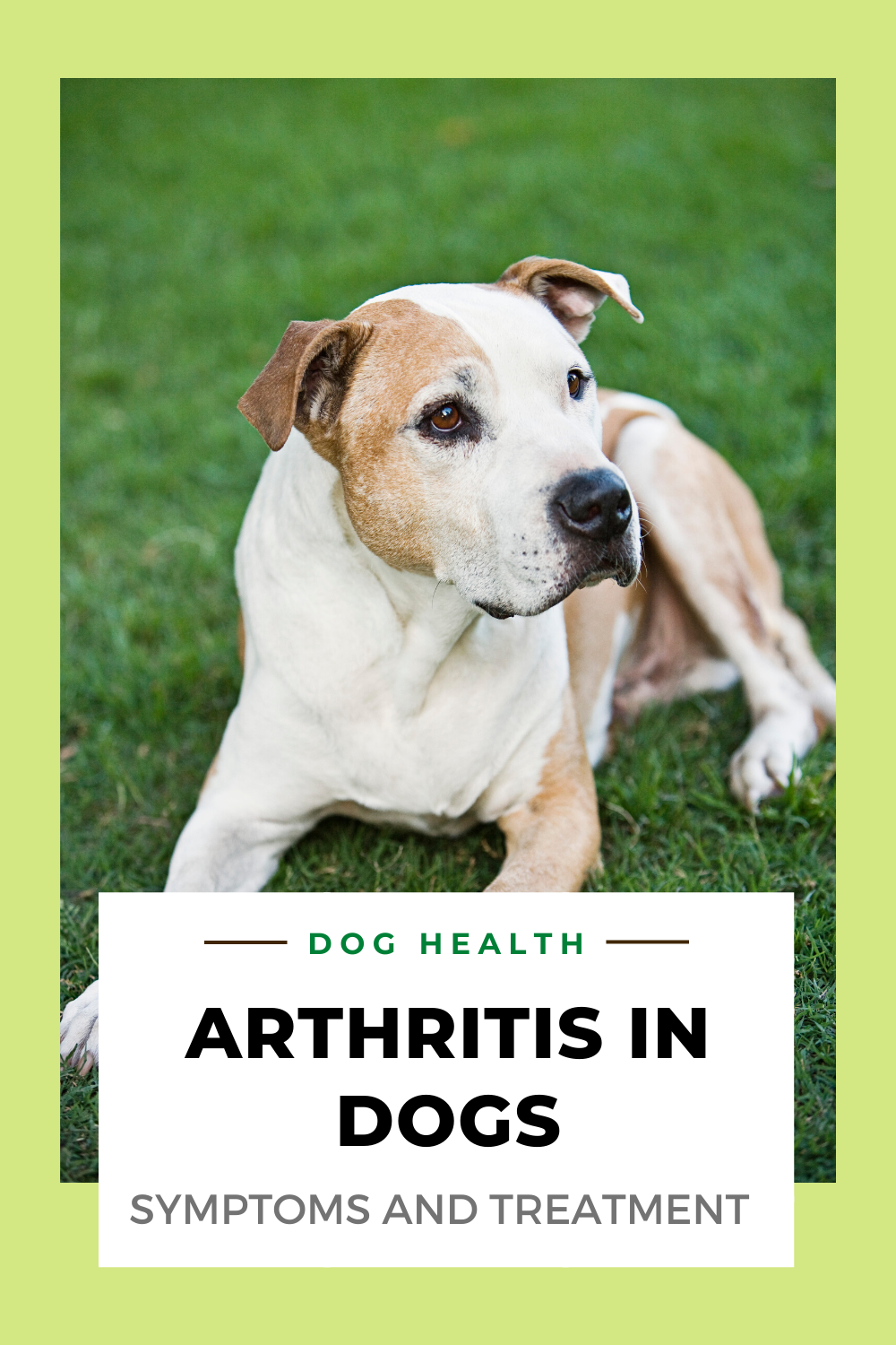 Dog Health How To Treat Arthritis In Dogs Common Signs Dog Arthritis Natural Dog Health Dog Health Tips