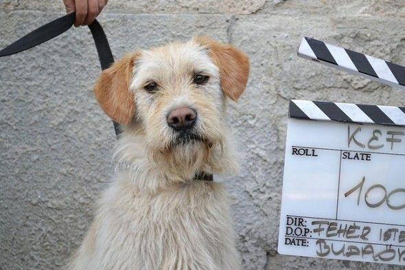 Movie Helps 250 Dogs Find Forever Homes Med Bilder