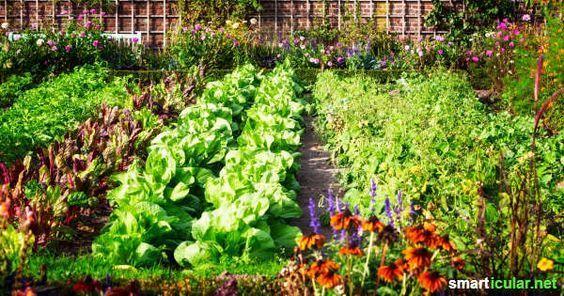 Statt Insektizid: diese Pflanzen helfen einander gegen Schädlinge -