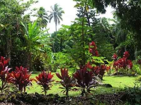 decoracion jardines tropicales | Diseño de interiores