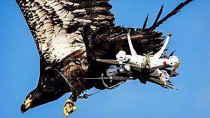 Droni dei terroristi come prede li catturano le aquile addestrate