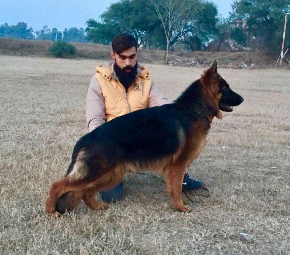 Pin by Ch RJR on German Shepherd In Pakistan | German, Pakistan