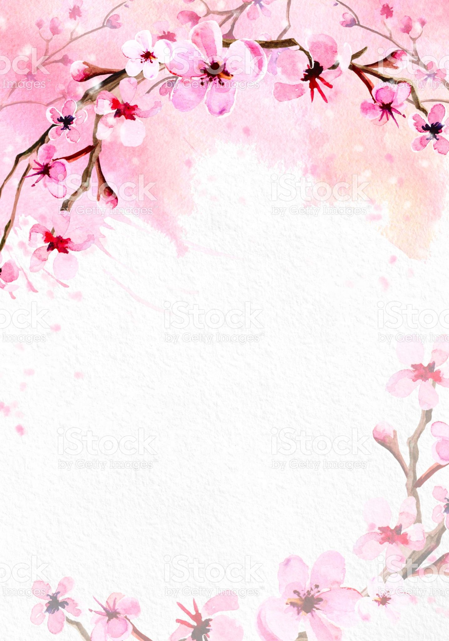 Cherry Blossom On Pink Watercolor Background Royalty Free Cherry Blossom On Pink W Cherry Blossom Watercolor Cherry Blossom Wallpaper Cherry Blossom Background