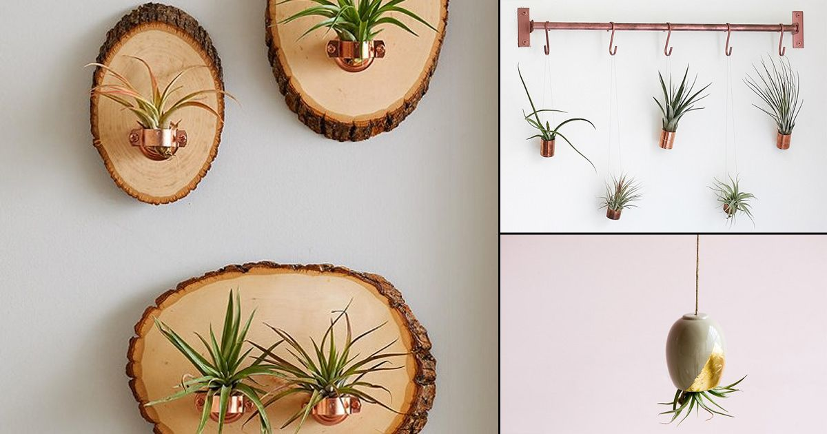 Learn How To Make Hanging Air Plant Holders At Minimal Cost And In No Time Enhance Your Display