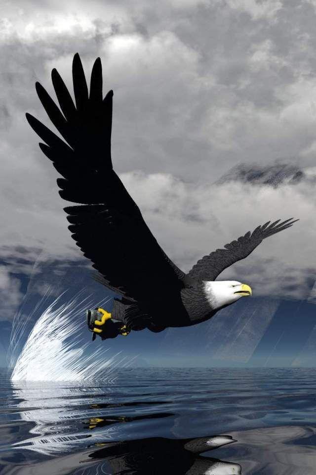 Eagle Wallpapers Wallpaper Burung Pemangsa Predator Philadelphia Eagles Cool eagle wallpaper 3d