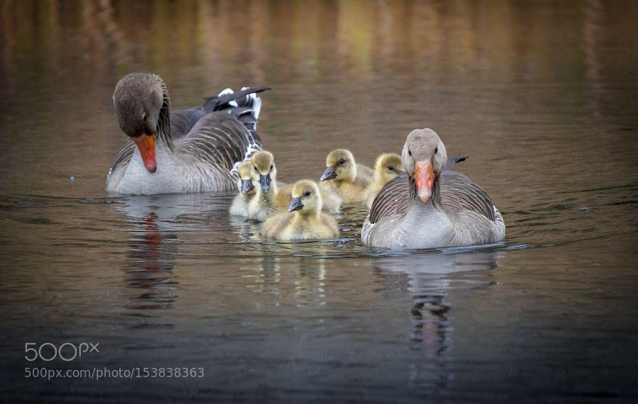 geese.jpg by mwillen71 via http://ift.tt/254l6Be