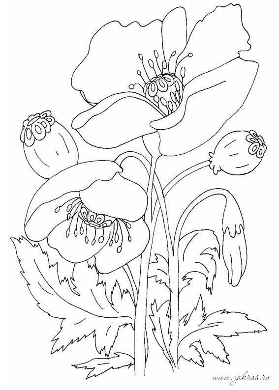 Раскраска Цветы. Растения - раскраски (17 шт.) (с ...