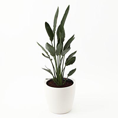 [Net] Rechuza limited to the planted Sutorerichia-Regine floor size LL   Muji net store