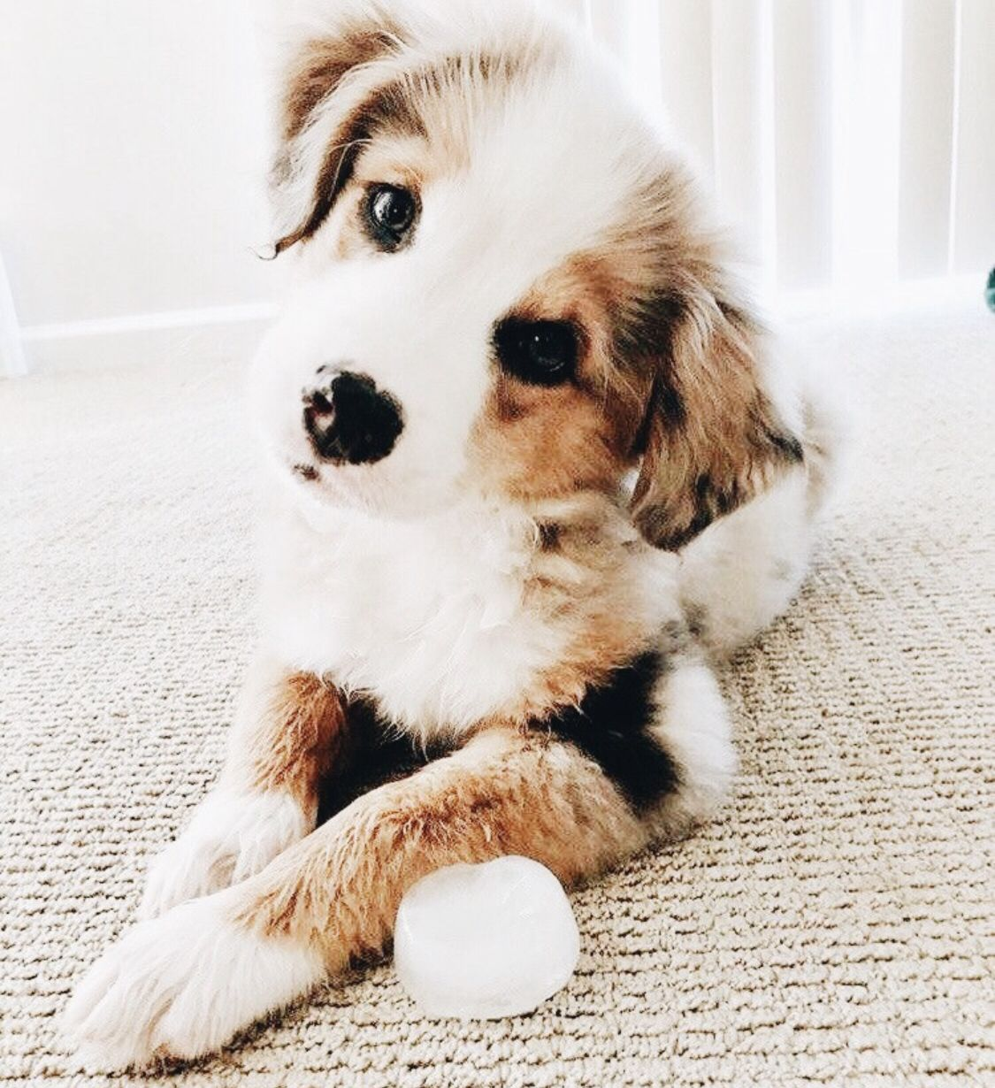 Pinterest Frauke Ds Cute Baby Animals Cute Animals Cute Dogs And Puppies