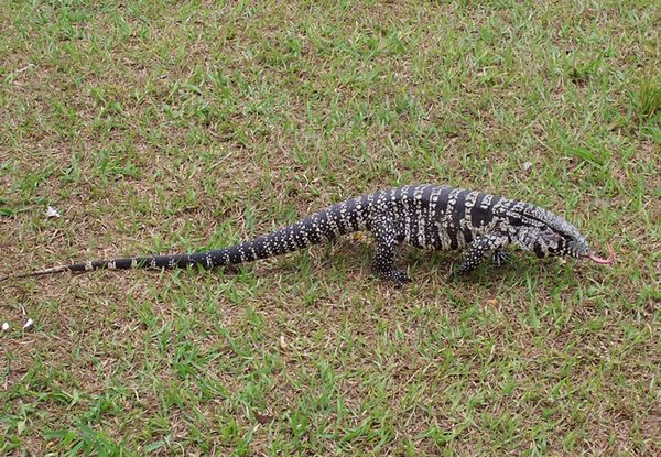 This Invasive Species Was Reportedly Sighted On Jekyll Island