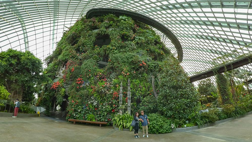 A Botanical Walk Around the Flower Dome and Cloud Forest