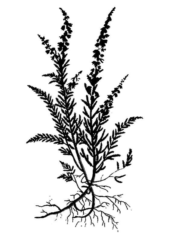 a plaid heather 600 | Alice Isn't Dead | Plant tattoo ...