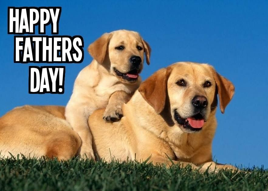 father's day gifts from dog uk